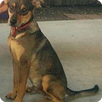 Adopt A Pet :: Skittles Mix - Denver, CO
