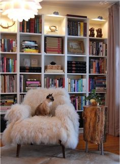A literate and chic kitty!