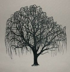 Willow Trees Black And White On Pinterest Weeping