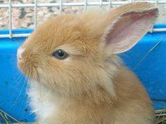 La mia coniglietta