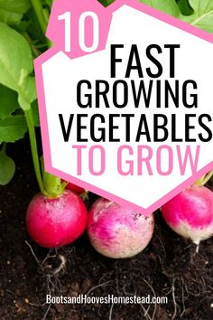 10 super fast growing vegetables for the garden. Get a harvest in as early as 20 days! Find a list of some of the quickest growing crops. #garden #gardening #homegarden Fast Growing Vegetables, Planting Vegetables, Organic Vegetables, Veggies, Growing Seeds, Growing Plants, Vegan Kitchen, Kitchen Recipes