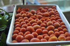 frozen tomatoes Jam Recipes, Canning Recipes, Fruit Recipes, Baby Tomatoes, Small Tomatoes, Fruit Jam, Fruit And Veg, Freezing Cherry Tomatoes, Grape Tomato Recipes