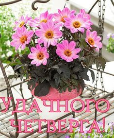 Diy And Crafts, Congratulations, Floral Wreath, Plants, Cards, Day, Quote, Floral Crown, Plant