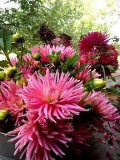 VOM HÜGEL Steiermark Shabby, Gardening, Flowers, Plants, Red, Dekoration, Nice Asses, Lawn And Garden, Plant