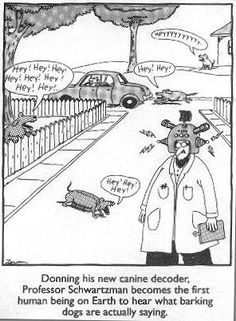 The Far Side (comic): What is the best Gary Larson The Far Side cartoon? Gary Larson Cartoons, Gary Larson Comics, Far Side Cartoons, Far Side Comics, Dog Cartoons, Funniest Cartoons, Cartoon Jokes, Cartoon Images, Haha Funny