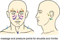 Sinus Massage pressure points - work in small circular motions starting at point 1 Sinus Remedies, Allergy Remedies, Cold Remedies, Health Remedies, Sinus Pressure Relief, Asthma Relief, Sinus Massage, Lymphatic Massage, Massage Pressure Points