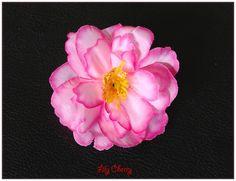 Fleur artificelle petite fleur de pêcher dégrader rose barrette cheveux x1 : Décoration florale par lilycherry