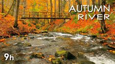 Autumn River Sounds – Relaxing Nature Video – Sleep/ Relax/ Study – 9 Hours – HD – Exercises and Fitness Deep Sleep Meditation, Relaxation Meditation, Meditation Youtube, Meditation Videos, Calming Sounds, Nature Sounds, Virtual Travel, Virtual Tour, Living Room Workout