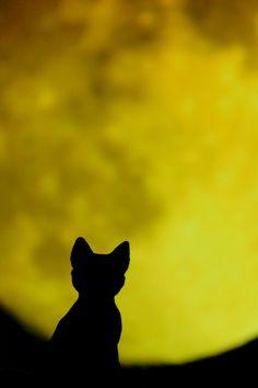 Algumas vezes a lua aparece com contornos mais que perfeitos #gato #lua #perfeição