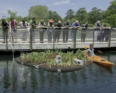 The floating garden is believed to be the first in Richmond, and it will help improve water quality in the lake, absorbing  and removing nutrients from the Chesapeake Bay watershed. CBF's Upham Brook Watershed Restoration Project is made possible by a grant from the Chesapeake Bay Restoration Fund.