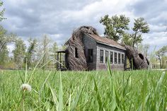 Willow-Wrapped Art Centers : willow trees