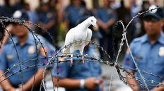 Droit d'ingérence : morale humanitaire ou stratégie? | Luxe Radio | Accédez à l'état d'esprit du Luxe