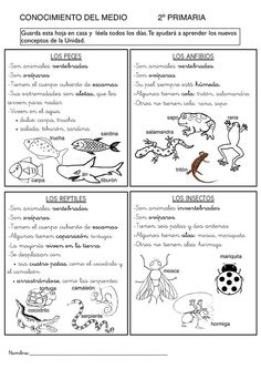 Los animales Kid Science, Science Classroom, Science Lessons, Science And Nature, Spanish Anchor Charts, Spanish Teaching Resources, Bilingual Classroom, Animal Projects, Educational Activities