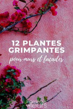 Wall Climbing Plants, Small City Garden, Potager Garden, Interior Garden, Plantar, Plant Wall, Plantation, Sustainable Living, Garden Projects