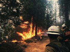 Brave Firefighter Captures Firsthand Images Of Forest Fires Before And After Extinguishing Them