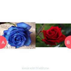 Whats better... Blue orRed flower? Click here to vote @ http://getwishboneapp.com/share/14593455