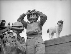 The Attentive Dog | The 26 Most Badass Animals From World War II... so cool, how interesting.