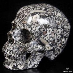 Crinoid Fossil Crystal Skull Crystals And Gemstones, Stones And Crystals, Skulls For Sale, Crinoid Fossil, Badass Skulls, Crane, Skull Artwork, Scary Art, Skull Decor