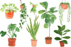 Check out our illustrated guide to house plants and how to care for them.