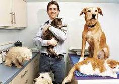 imagenes veterinario - Google Search
