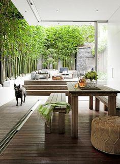 planter des bambous, extérieur moderne, barrière brise-vue de bambous vivaces