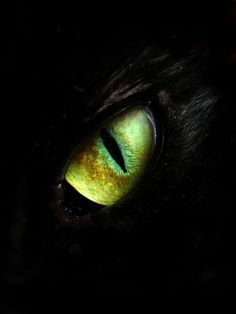 Crazy Eye of Sauron kitty, one to rule them all, one to take them in the dark and smite them...
