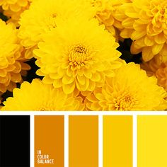 Sunny Colors Warm Raise The Spirits And Whet Ee That Is Why They Are Used In Kitchen Dinin Alexandra Yellow Color Palette