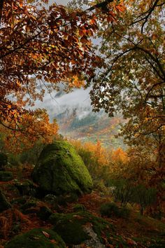I like Pictures / opticcultvre: Outono na Serra da Estrela by...