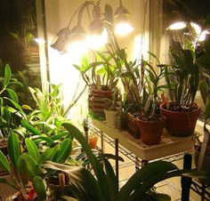 Realizing the importance and ever-increasing demand of artificial lights for plant growth, several manufacturers came into the limelight w...