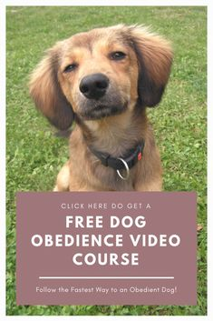 This FREE video series will reveal the method that will make your dog CHOOSING to obey you, every time! Learn why most Dog Training methods only set you up to fail. Dog Training Methods, Basic Dog Training, Dog Training Techniques, Training Your Puppy, Training Dogs, Crate Training, Puppy Obedience Training, Dog Minding, Positive Dog Training