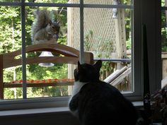 squirrel teasing cat