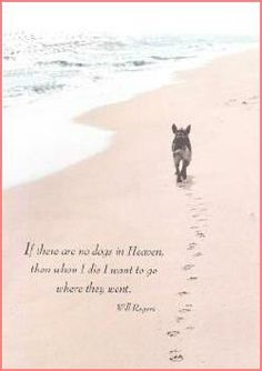 Here's a lovely dog sympathy card. Quote on Front: If there are no dogs in Heaven, then when I die I want to go where they went Dog Death Quotes, Dog Loss Quotes, Pet Quotes Dog, Dog Quotes Love, Animal Quotes, Lost Dog Quotes, Dog In Heaven Quotes, Quotes About Dogs Passing, Animals