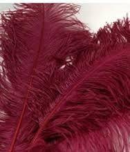 Burgundy Ostrich Feather