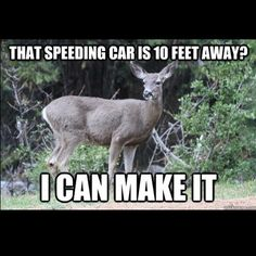 """""""That speeding car is 10 feet away? I can make it."""" #hunting #humor"""