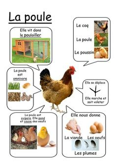 Poule - Animaux de la ferme animals silly animals animal mashups animal printables majestic animals animals and pets funny hilarious animal French Teacher, Teaching French, French Education, Kids Education, How To Speak French, Learn French, Montessori Activities, Educational Activities, Montessori Infant
