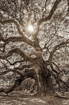 love all the limbs going every which way
