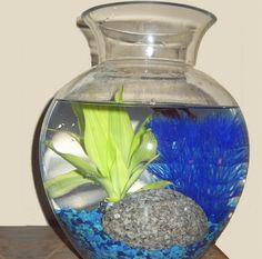 Make a Tabletop Water Garden  --Credit: Shelley Wigglesworth