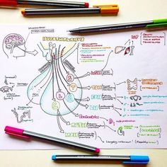 "Dr Sarah Clifford Illustration no Instagram: ""TBT to my diagram showing an overview of the endocrine function of the pituitary gland! Something to get the hormones pumping this morning…"""