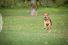 Reese the dog photographed in Ottawa by Liz Bradley of elizabeth&jane photography