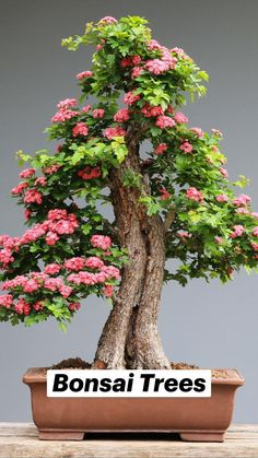 Topiary Plants, Bonsai Plants, Bonsai Garden, Dwarf Plants, Bonsai Trees, Bonsai Azalea, Tree House Decor, Bonsai Tree Types, Indoor Bonsai