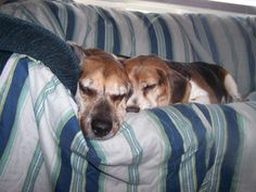 Jake and Maggie napping