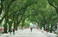 Túnel de mangueiras, calçadão da Praça da República, centro comercial de Belém