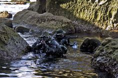 US Navy SEALs    This is my life. : Photo