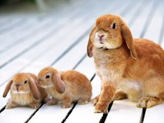 Google Image Result for http://wallpapers.li/wallpapers/Baby-bunnies-and-their-mother.jpg