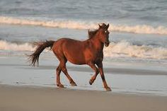 Image result for wild horses on the beach