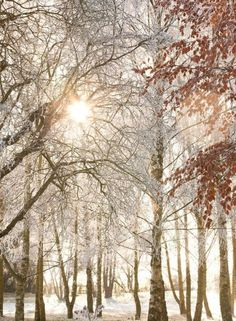 Winter Wood Printed Canvas (002548) - Arthouse Art - A photo image on a printed canvas of a beautiful snow scene with the sun shining through snow covered trees. Size: 77 x 57 cm and 1.8 cm deep.