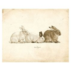 Vintage Rabbits on French Ephemera Print 8x10 P114 ❤ liked on Polyvore featuring home, home decor, wall art, bunny home decor and rabbit home decor