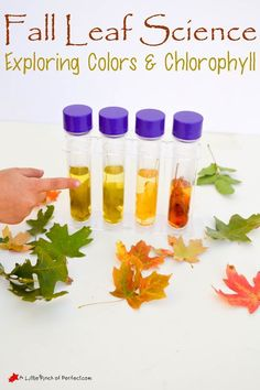 Easy Fall Leaf Science Experiment: Exploring Colors & Chlorophyll with Kids | A Little Pinch of Perfect