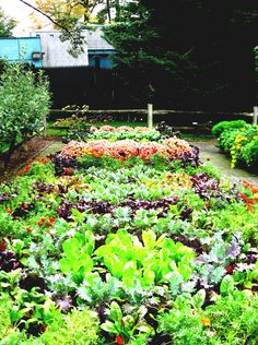Country Vegetable Garden Ideas vegetable garden rectangular beds ideas small garden design gravel
