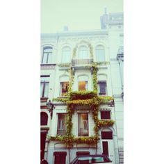 Ivy on purpose #brussels #bruxelles #saintgilles #stgilles #sintgillis #belgium #belgique #brusselsbuildings #brusselsarchitecture #ivy #lierre #klimop (at Rue de La Victoire)
